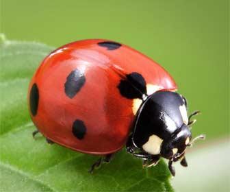 Insectos de la suerte
