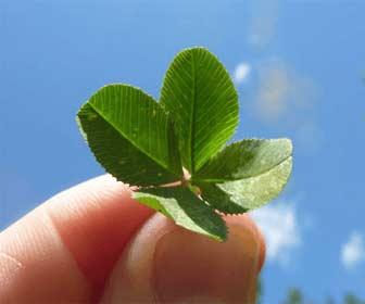 Trébol de 4 hojas